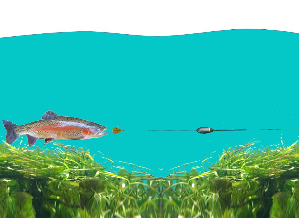 forellenangeln_spirolino_spinnfischen